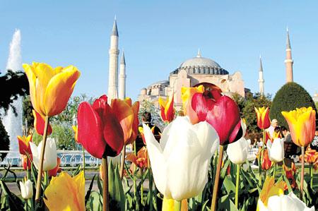 A tulipánok őshonos virágai Törökországnak