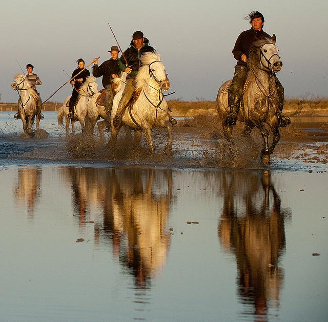 Cowboyok, bikák, flamingók, fehér lovak - Camargue