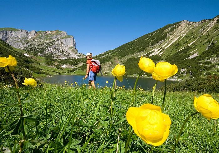Alpbach-völgy
