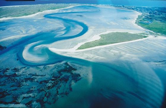 Wadden-tenger