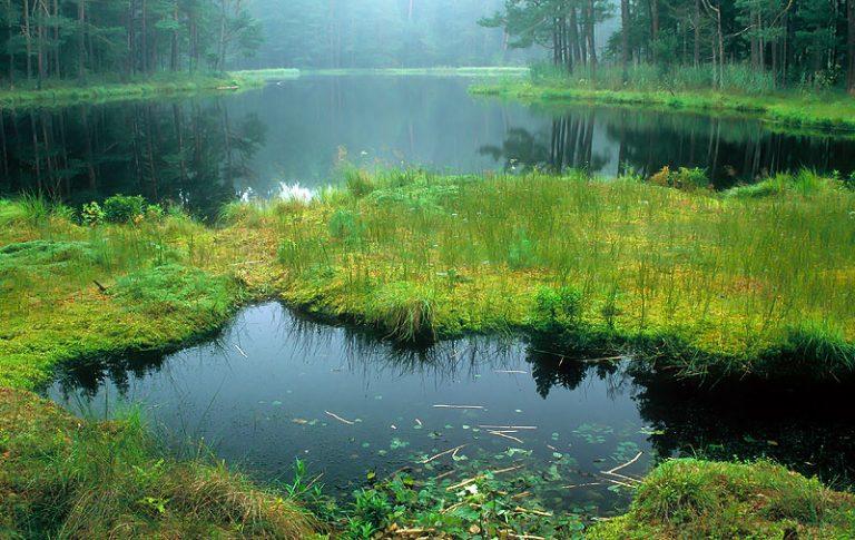 Wigierski Nemzeti Park