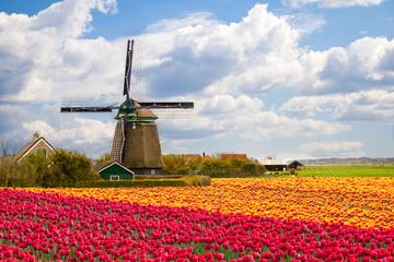 Hollandia legszebb szélmalmainak nyomában