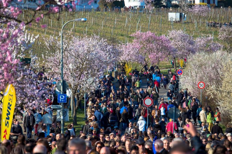 Mandelblütenfest