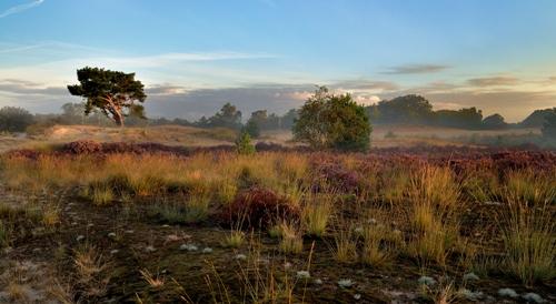 Loonse és Drunense Dűnék Nemzeti Park