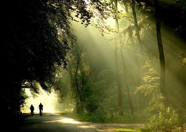 De Hoge Veluwe Nemzeti Park