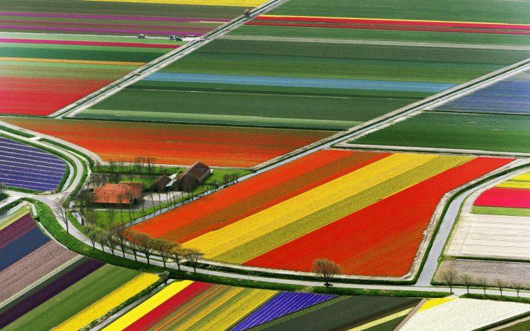 A tulipánok földjén