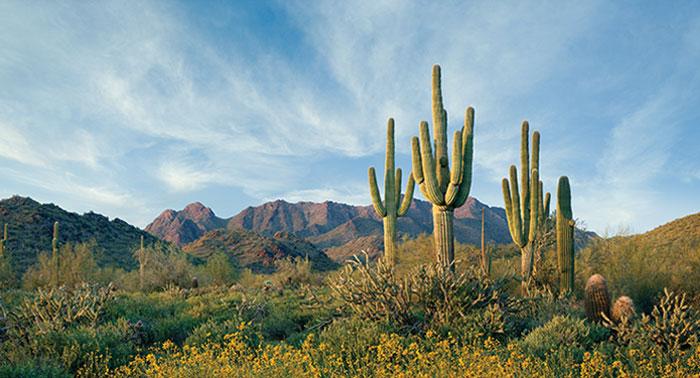 Sonora-sivatag