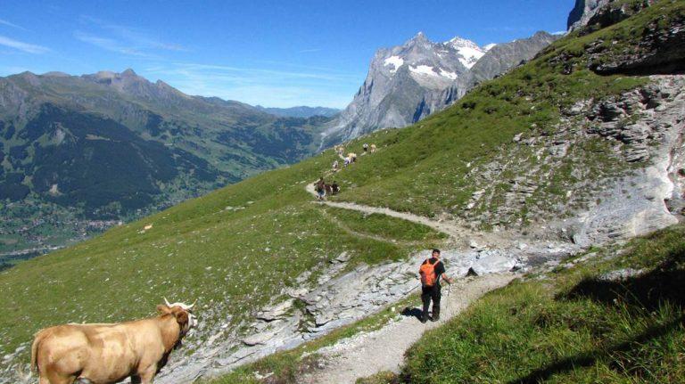 Eiger-ösvény