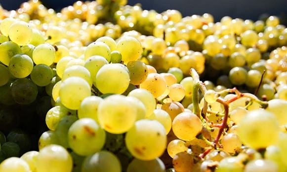 A 6 legjobb német bor