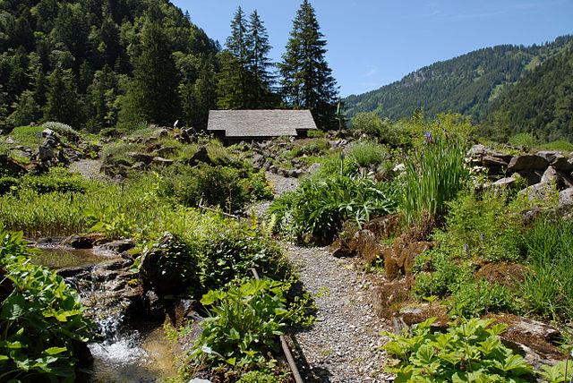 Thomasia Le Pont de Nant Alpesi kert