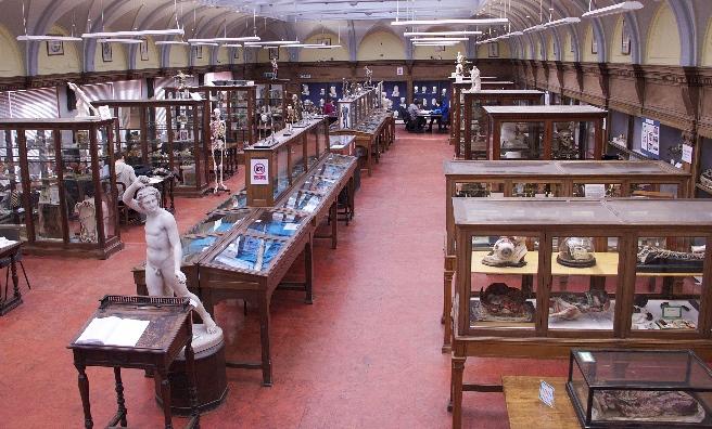 Anatómiai Múzeum, Edinburgh