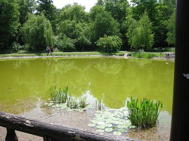 Békás-tó, Nagyerdő