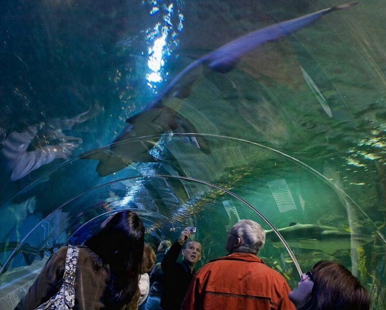Skócia Nemzeti Akváriuma a Deep Sea World