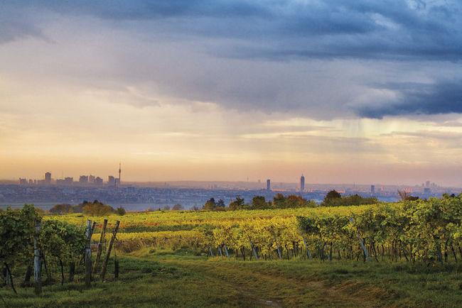 Bécsi bortermelő vidék