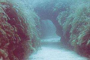 Málta a legendás Atlantisz?