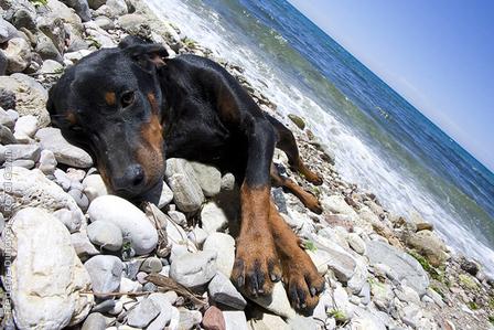 Kutya a parton
